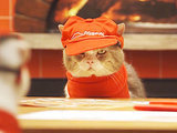 Pizza Hut Japan's New Ad Campaign Starring Cats Is 'Purr' Genius