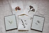 DIY: Pressed Seaweed Prints