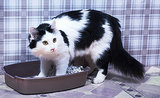 Ask a Vet: Why Do Cats Pee Outside the Litter Box?