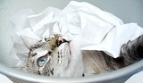 The Truth About 5 Edible Hazards for Cats