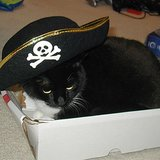 Avast, Ye Hearties: It's Meow Like a Pirate Day!