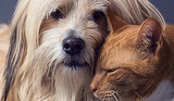 10 Pet Hair Hiding Places