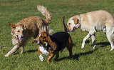How Do You Deal With Off-Leash Dogs in Your Area?