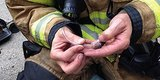 Firefighters Save Baby Hamsters With Teeny 'Oxygen Masks'