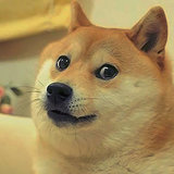 The Dog Behind Doge: Is Internet Fame a Blessing or a Curse?