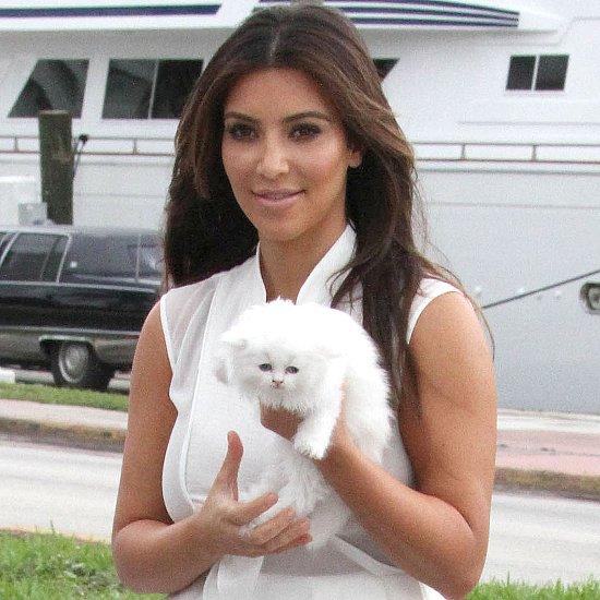 Celebrity Cat Ladies   Pictures