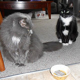 5 Ways My Cats Tell Me It's Mealtime (They're Not Subtle)