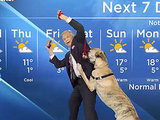 WATCH: Ripple the Dog Steals the Spotlight During Canadian Weather Forecast