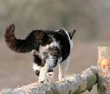 GPS Tracks Where Outdoor Cats Go