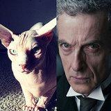 Doctor Who? Cats Who Look Like Peter Capaldi