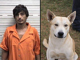 A Cop's Best Friend: Dog Helps Police Bust Owner on Drug Charges