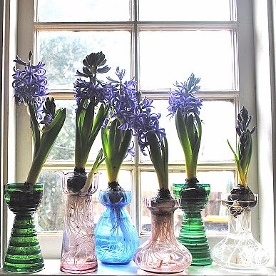 How to Force Flower Bulbs