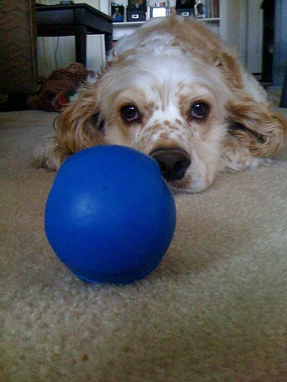 Charlie and his one true love, the blue ball