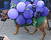 Homemade Howl-oween: A Grape Costume Idea!