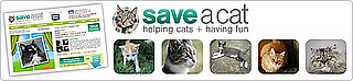 Save a Cat on Facebook: In the LINK of an Eye!
