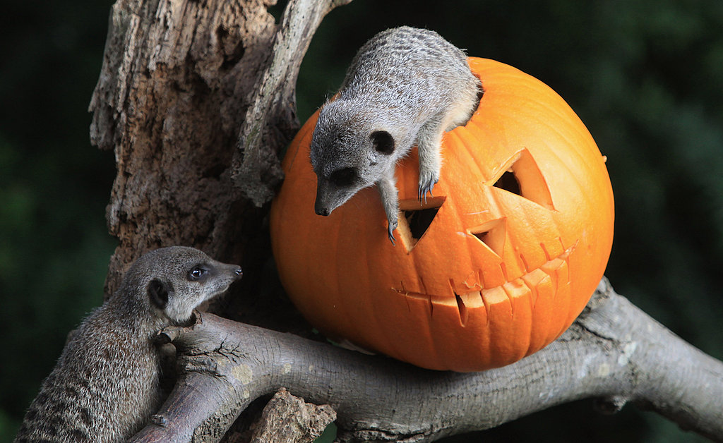 Bristol Zoo Celebrates Halloween
