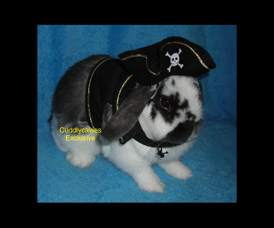 Pirate's Bunny