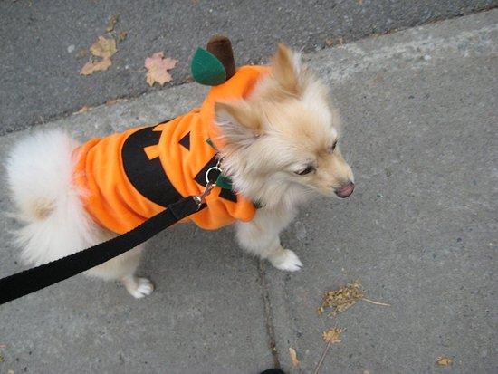 Enzo's Pumpkin Stroll