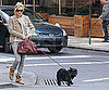Photo Slide of Sienna Miller Walking Her Dog