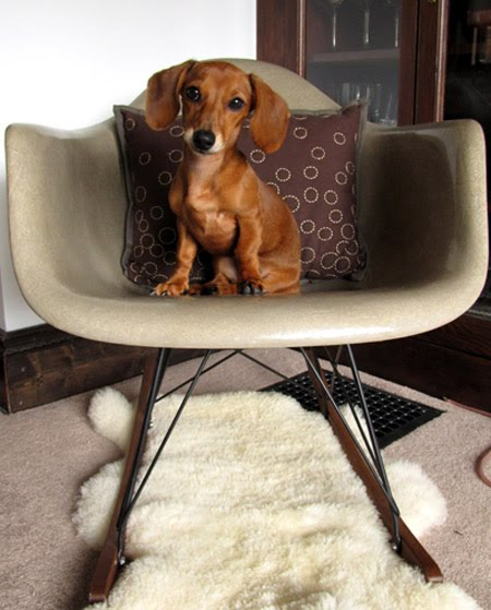 Desire to Inspire featured an Eames rocker in a recent pets roundup. How cute is this little pup? I'm also a fan of using sheepskins with the rockers — it softens the look.  Source