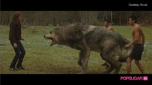 New Moon Wolf Pack Video
