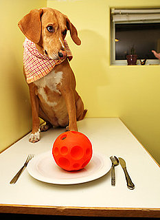 Do Tell: What's on the Menu For Your Pets This Thanksgiving?