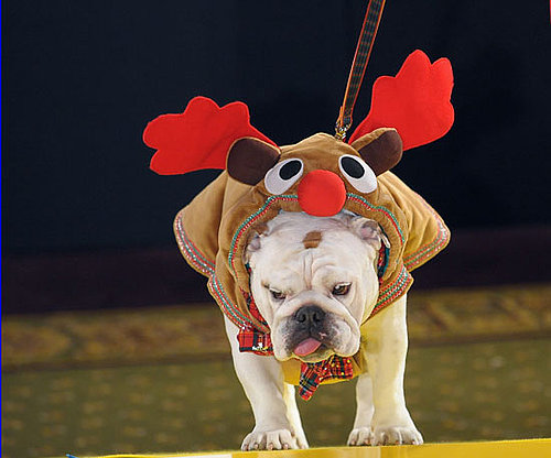 Pups Go All Out for Harrods Pet-a-Porter Fashion Show