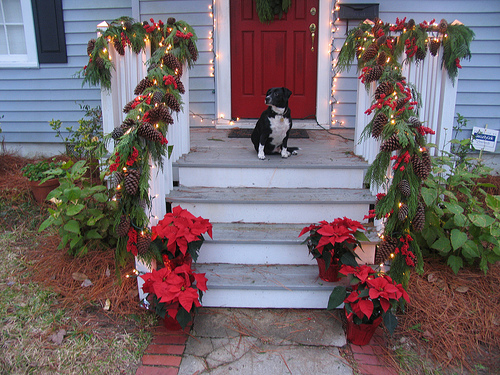 Wrap garlands around porch railings to complete the look. Of course, a good looking pooch can only enhance the holiday decorations!  Source:  Flickr User byrdiegyrl