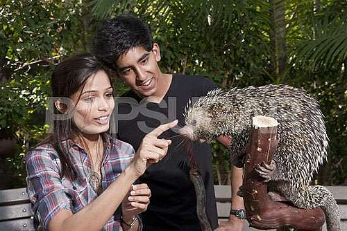 Photos of Dev Patel and Freida Pinto at San Diego Zoo, Danny Boyle Confirms Dev Patel and Freida Pinto Are a Couple Soul Mates