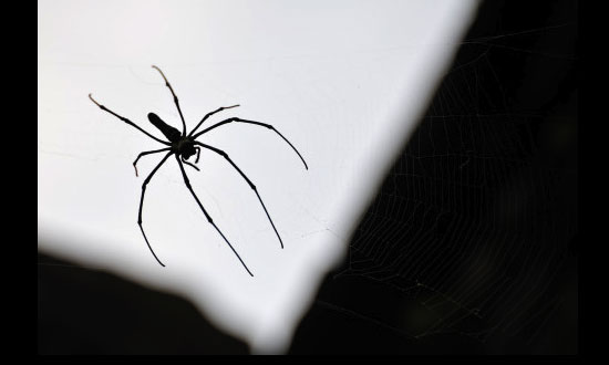 Spider Venom For Erectile Dysfunction