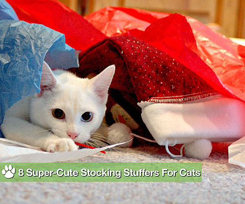 8 Super-Cute Stocking Stuffers For Cats