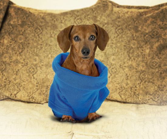 Snuggie Sensation Comes For the Dogs