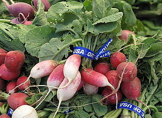 Guide to Radishes