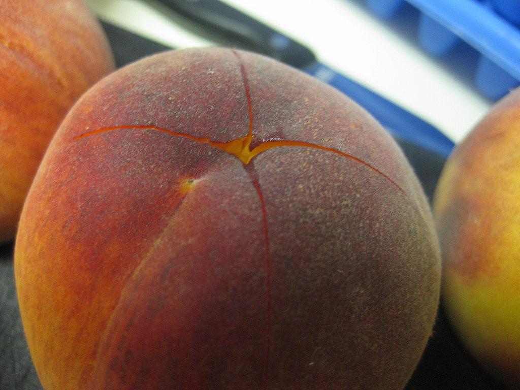 Peach Donkey