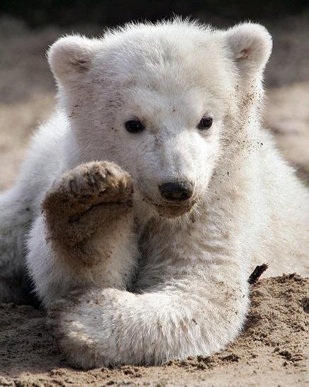 1. Knut