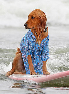 Photos of the 2009 Dog Surfing Competition in San Diego