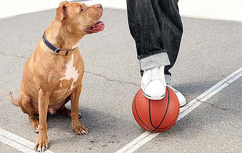 Basketball Toys For Dogs Make a Slam Dunk!