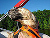 Have Your Dogs Gone Boating?