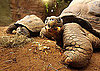 Check Out The Galapagos Turtles At the New &#039;Giant of the Galapagos&#039; Exhibit in ZSL London Zoo