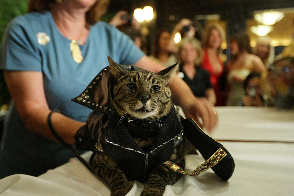 Rocker Cat