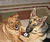 Pet Pic of the Day: Sports Rivals Max and Duke