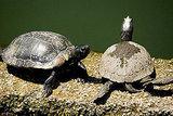 July 2008: Mmmm, Turtle