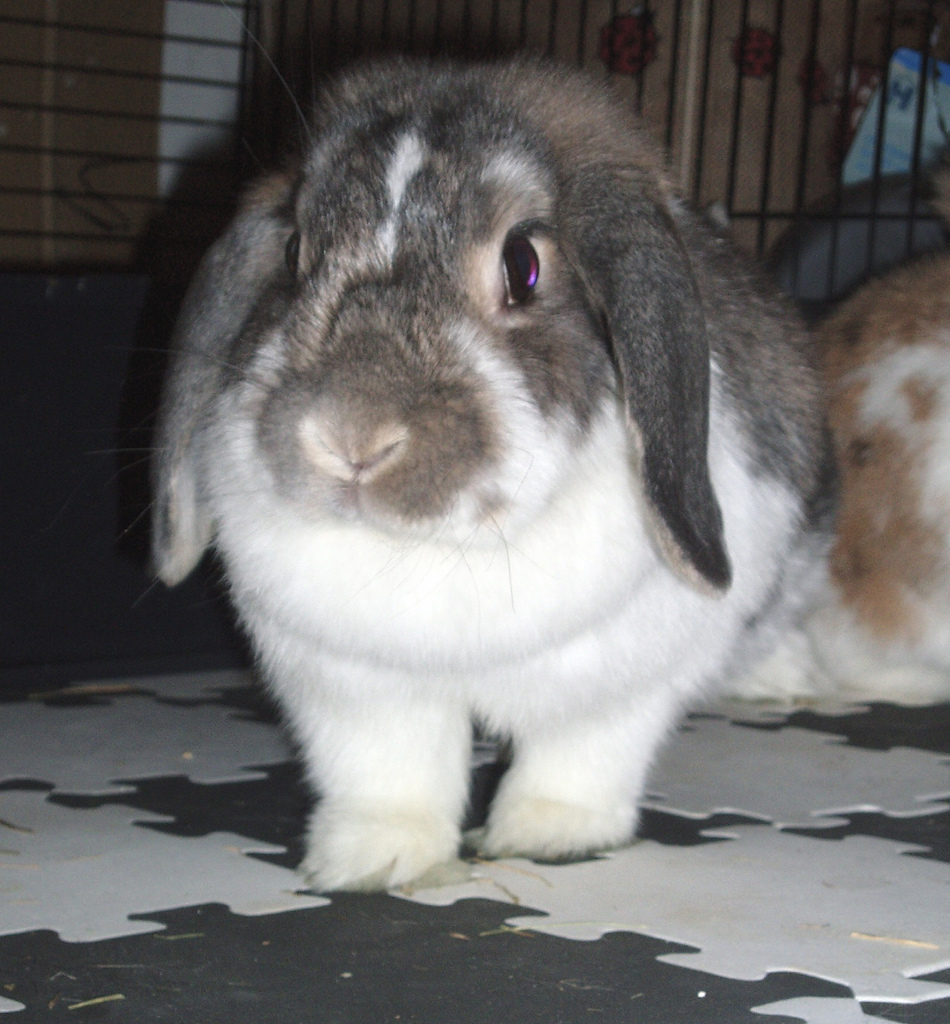 Popular Pet Rabbit Names