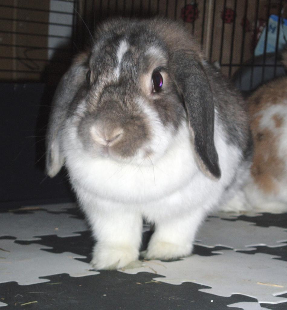 Popular Pet Rabbit Names