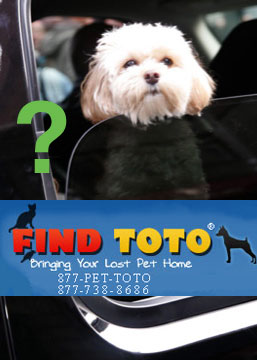 "How ""FindToto"" Works . . . and Will It Work For Jess?"