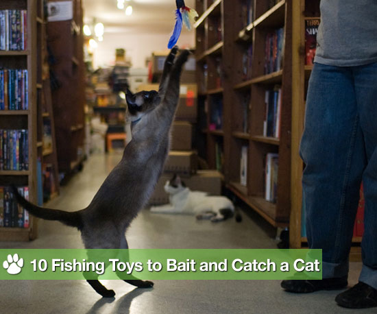 Go Fish! 10 Toys to Bait and Catch a Cat