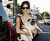 Slide Photo of Jessica Alba Carrying Her Pug To The LA Vet