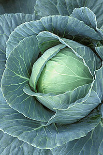 Cabbage and Your Breasts