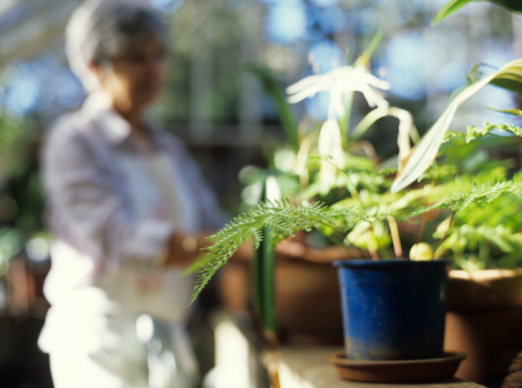 Bring any houseplants inside to prevent them from freezing.