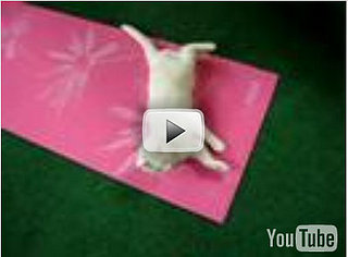 Cat Does Yoga